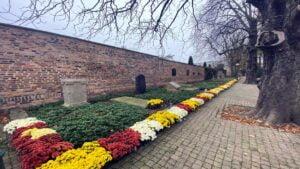 Poznań: Chryzantemy od poznańskich ogrodników już rosną na rabatach