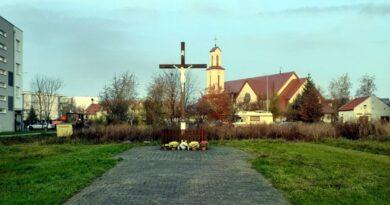 drzewa Strzeszyn fot. ZZM