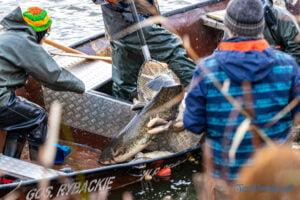 jezioro malta odlow ryb fot. slawek wachala 4436 300x200 - Poznań: W Malcie trwa... wielkie łowienie ryb