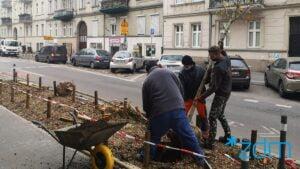 maleckiego fot. zdm2 300x169 - Poznań: Na Małeckiego znów rosną drzewa!