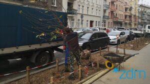 maleckiego fot. zdm3 300x169 - Poznań: Na Małeckiego znów rosną drzewa!