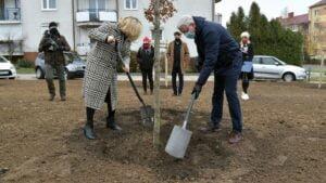 sadzenie drzew za frekwencje fot. ump2 300x169 - Poznań: Drzewa za frekwencję już rosną!