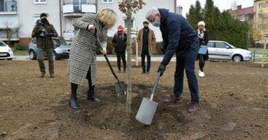 sadzenie drzew za frekwencję fot. UMP