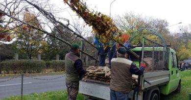 sadzenie nowych drzew fot. ZDM