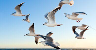 ptaki fot. pixabay