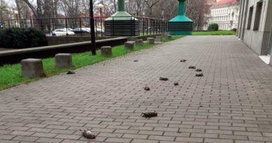 martwe ptaki po Sylwestrze w Warszawie fot. straż miejska Warszawa