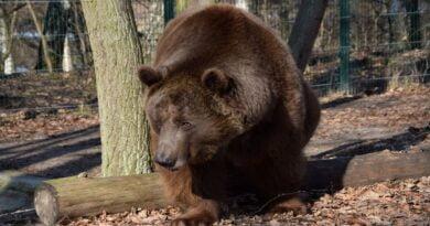Baloo fot. Zoo Poznań