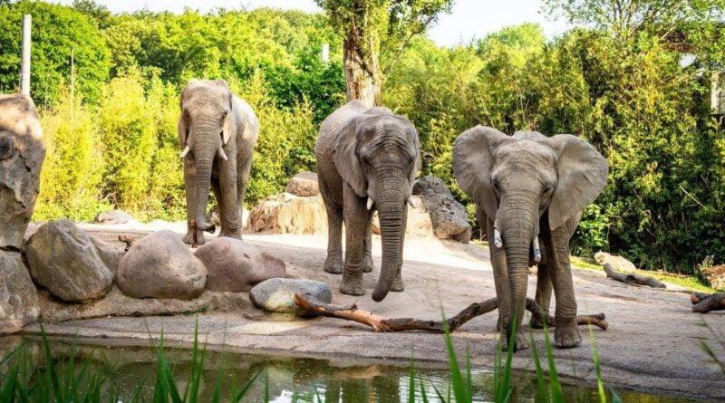 słonie fot. Zoo Poznan
