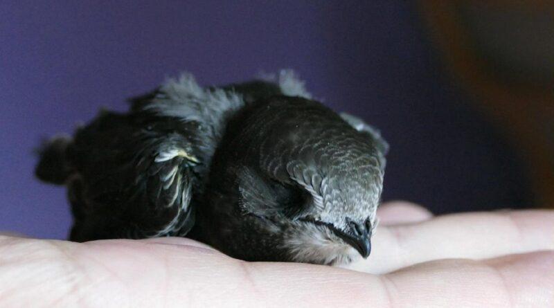 standardy ochrony ptaków i nietoperzy fot. UMP