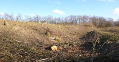 Wycinka 116 drzew, w lutym 2020 fot. Koalicja ZaZieleń