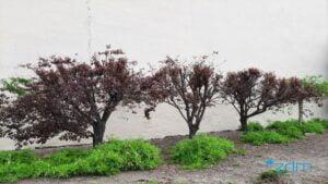 estkowskiego fot. zdm3 300x169 - Poznań: Sprawa drzew z Estkowskiego trafi do sądu