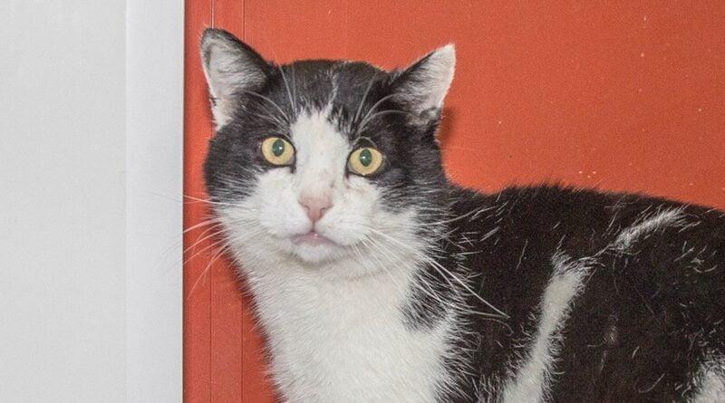 kot szuka domu fot. Schronisko dla Zwierząt w Skałowie