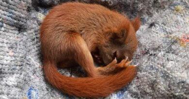 uratowana wiewiórka fot. ZZM