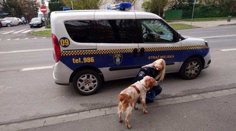 znaleziony pies fot. SMMP