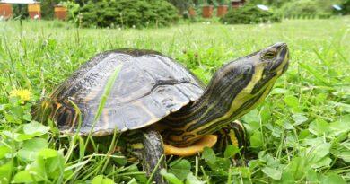 żółw fot. UPP