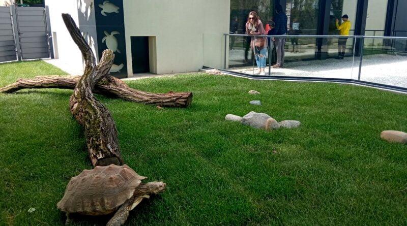 Żółwi Dom