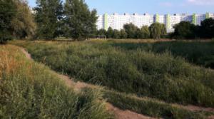 niekoszony trawnik bez cech ozdobnych fot. UPP
