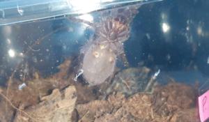 pająki fot. Straż Miejska w Mosinie