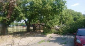 przewrocone drzewo fot. smmp 300x161 - Poznań: Spadające dachówki i powalone drzewo. Pomogli strażacy