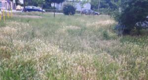 zaniedbany trawnik, źródło alergii wziewnej fot. UPP