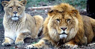 Kizia i Leoś fot. Zoo Poznań
