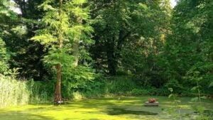 Ogród Dendrologiczny UPP fot. L. Łada