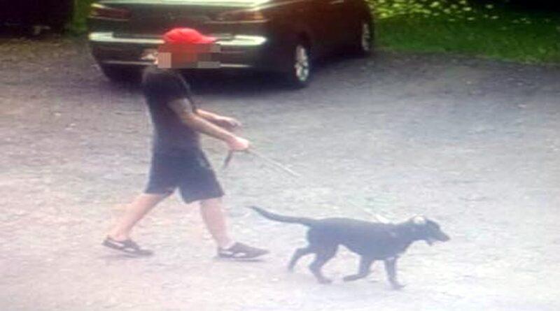 pies, który pogryzł dziewczynkę fot. policja Gniezno