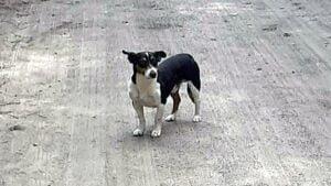 pies wyrzucony w worku fot. Przytulisko w Grodzisku Wlkp