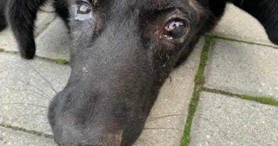 uratowany pies fot. Ratujemy Zwierzaki