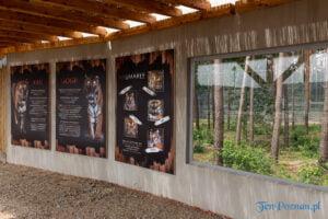 Uroczyste otwarcie nowego wybiegu dla uratowanych tygrysów Gogha i Kana fot. Sławek Wąchała