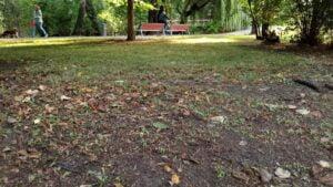 park Wodziczki, skoszony trawnik fot. L. Łada