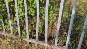 zaklinowana sarna, ogrodzenie fot. OSP Pniewy