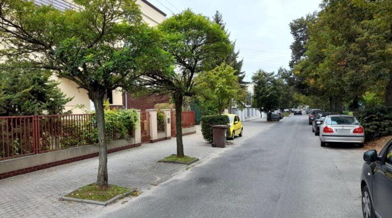 Grunwald, drzewa, fot. ZDM