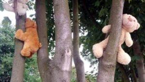 misie na drzewie fot. SMMP
